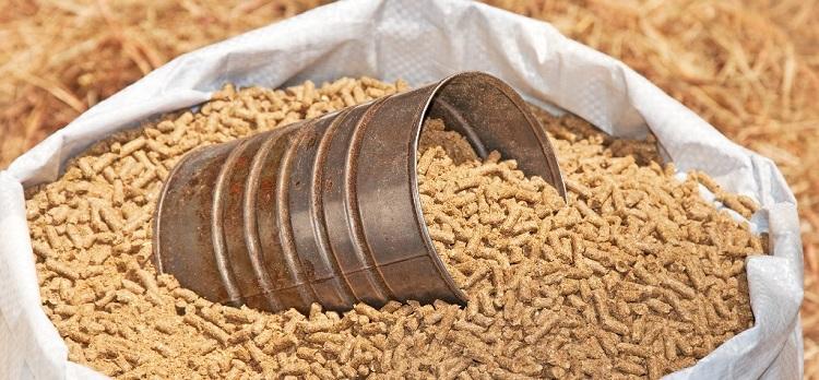 nhập khẩu nguyên liệu thức ăn chăn nuôi